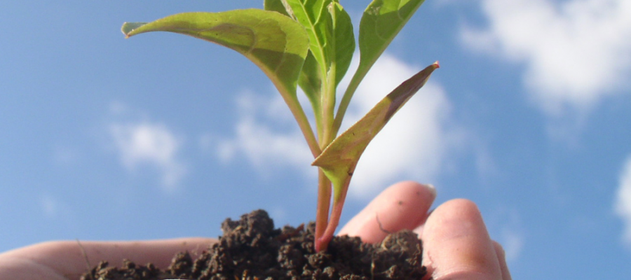 How to Grow your Blog (favorite posts)